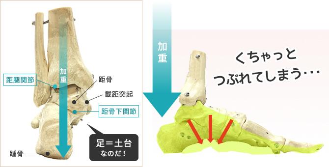 身体の動きを支える足骨格