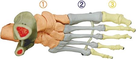 重要!!足骨格について
